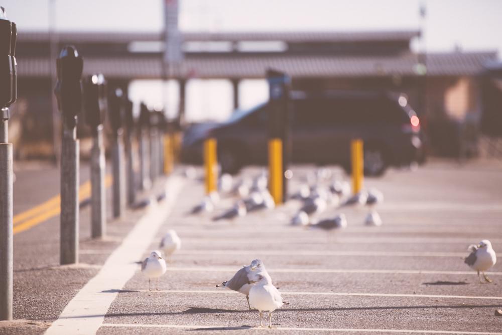 NYC Coney Island-6