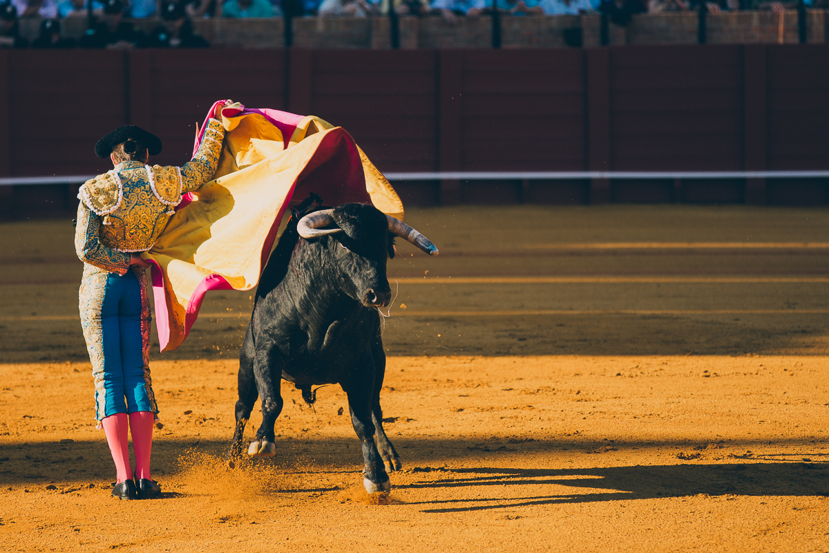 Seville Bull Fighting-11