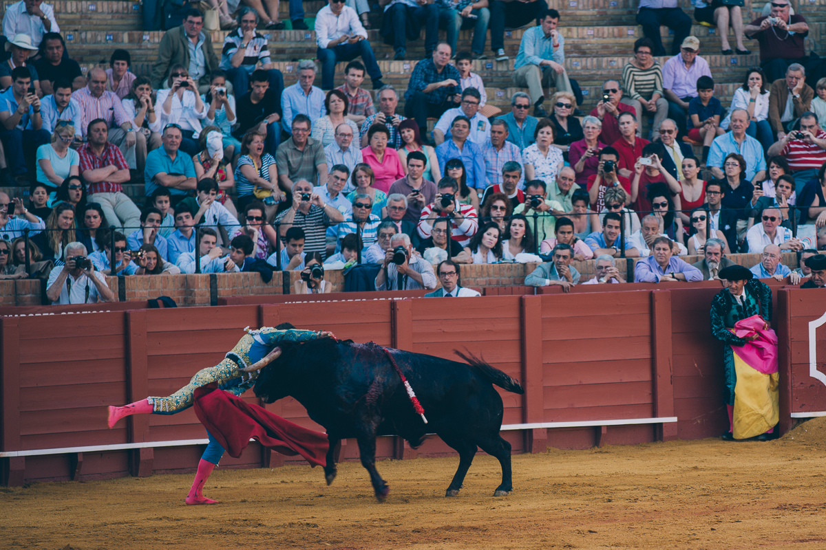 Seville Bull Fighting-13