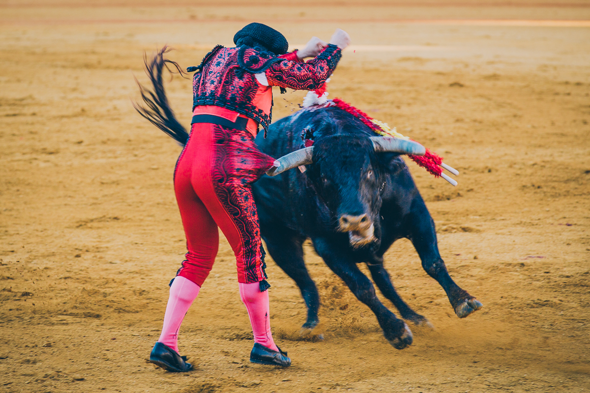 Seville Bull Fighting-15
