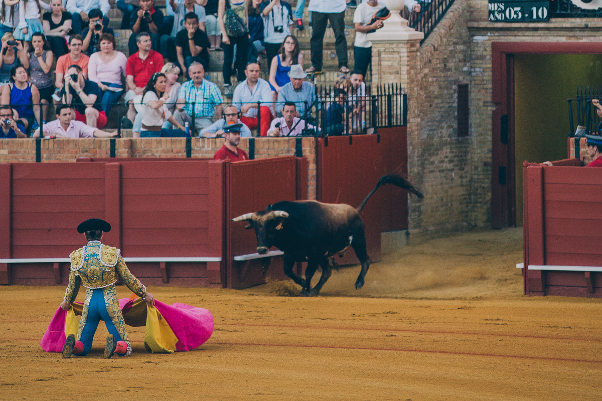 Seville Bull Fighting-16