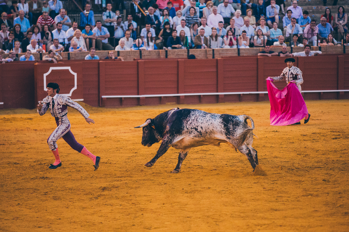 Seville Bull Fighting-28