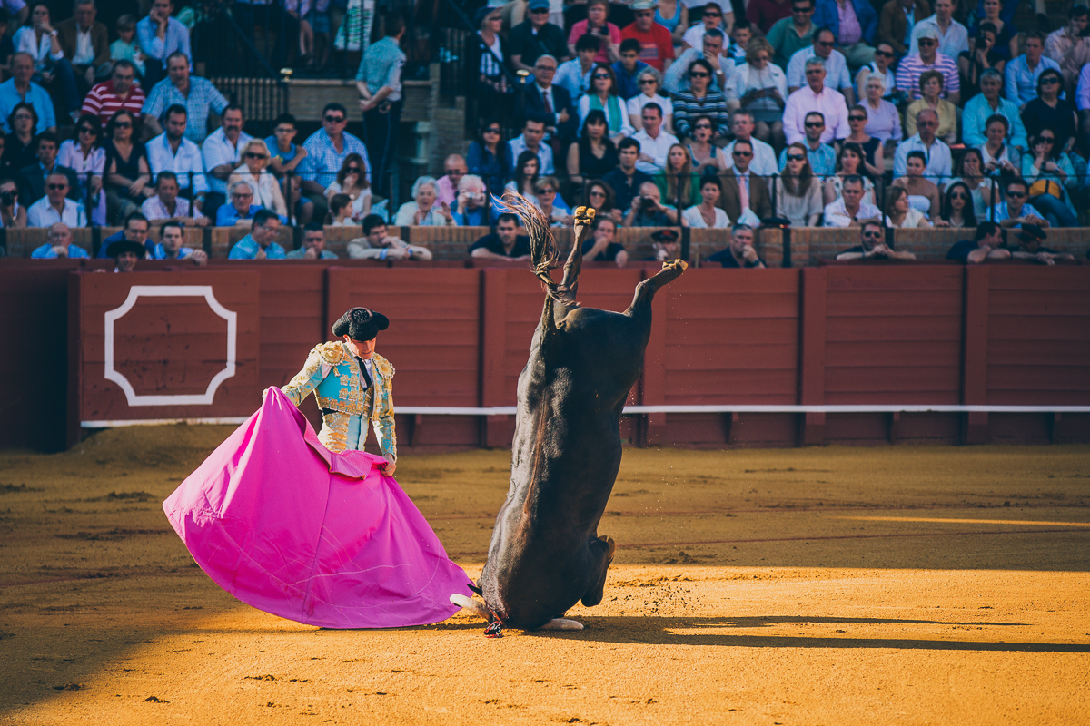 Seville Bull Fighting-5