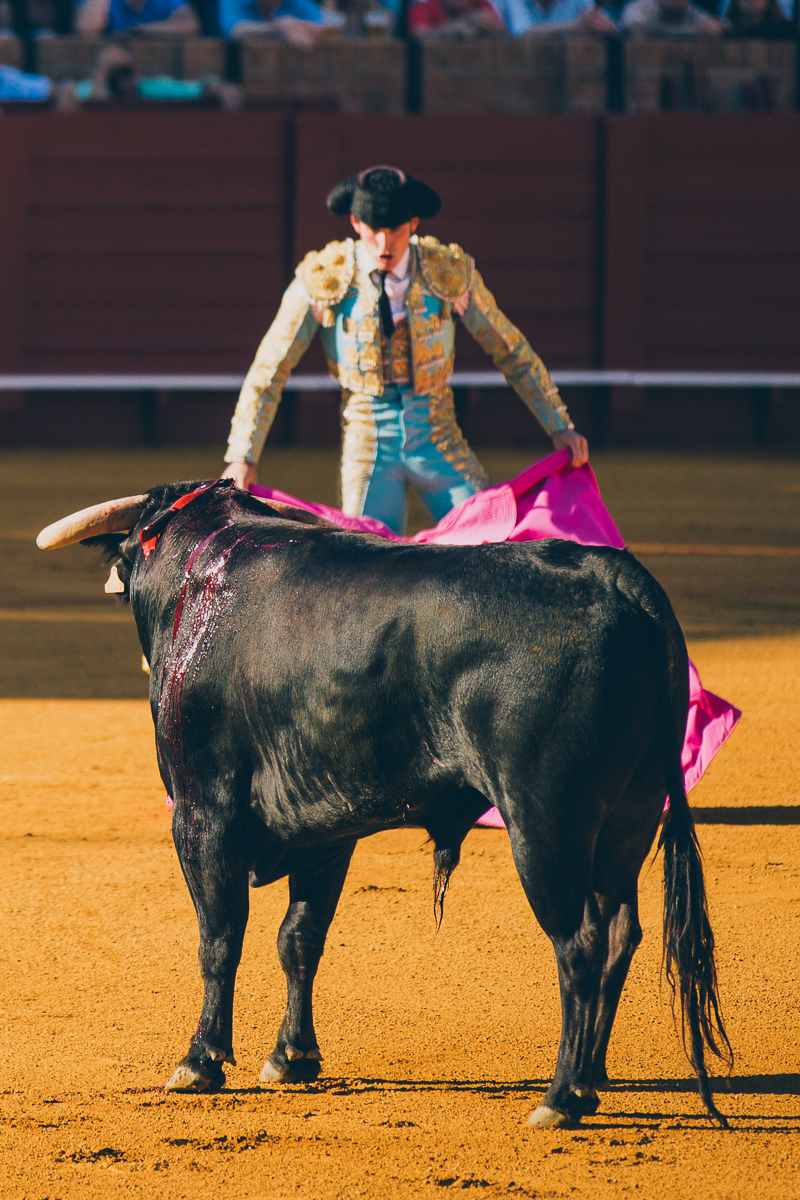 Seville Bull Fighting-7